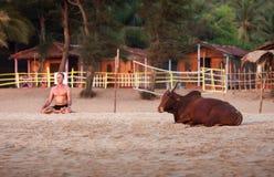Den bruna tjuren ligger nära den meditera mannen Arkivbilder