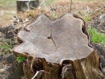 Den bruna wood plankan med gnarl Arkivbilder