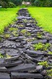 Den brutna asfalten i det gröna gräset Arkivfoto