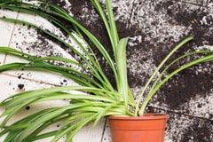 Den brutna blomkrukan med gröna växter ligger på kökgolvwina royaltyfri foto