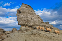 Den Bucegi sphinxen, Rumänien Royaltyfria Foton