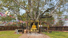 Den buddha statyn på bodhiträdet Fotografering för Bildbyråer