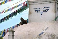 Den buddistiska stupaen av Swayambhunath, Katmandu återstod intakt after royaltyfri foto