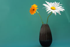 Den Calendulaofficinalis och kamomillen i vas på friläge gör grön bac Royaltyfria Bilder