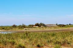 Den Camargue deltan, Frankrike Royaltyfria Bilder