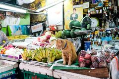 Den Cat That Guard The Fruit marknaden i Bangkok Thailand arkivfoto