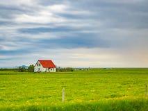 Den Celandic sikten av det gröna fältet med guling blommar och hus på a Arkivbilder