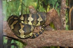 Den centrala FL zoo i Sanford Fl royaltyfri fotografi