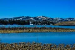 Den Chain sjön, provinsiella Chain sjöar parkerar, Alberta, Kanada Fotografering för Bildbyråer