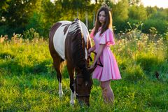 Den charmiga tonåringflickan i rosa färger klär med hästen i fältet Fotografering för Bildbyråer