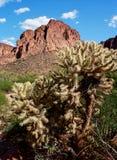 Den Cholla kaktuns med berget för ocker för det kaktusWren Bied redet parkerar Ari royaltyfri bild