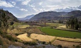 Den Colca kanjonen i Peru - sikt av den terrasserade fält och Colca floden Arkivbild