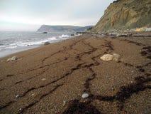 Den Crimean kusten Royaltyfri Bild