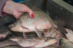 Den crucian nya fisken säljs på basaren Royaltyfria Bilder