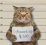 Den dåliga katten tuggade upp 500 dollar Royaltyfri Fotografi