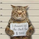 Den dåliga katten tuggade upp kontrollen arkivbild