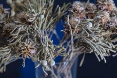 Den döda färgrika garneringväxten rotar Arkivfoton