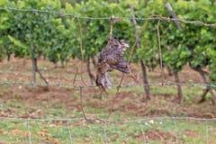 Den döda fågeln gillar fågelskrämman Royaltyfria Bilder