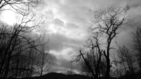 Den döda naturen arkivbilder