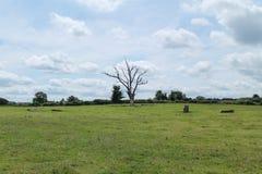 Den döda treen royaltyfri foto