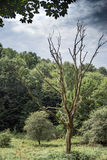 Den döda treen arkivfoton