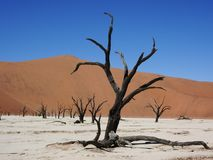 Den döda våtmarken royaltyfri bild