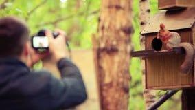 Den Defocused mannen tar en bild från hans kamera på ekorre i höstskogen 1920x1080 arkivfilmer