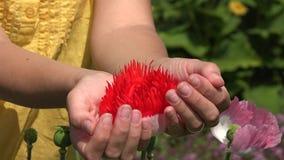 Den dekorativa vallmo i kvinnlig hand gömma i handflatan grön trädgårdsommar 4K lager videofilmer
