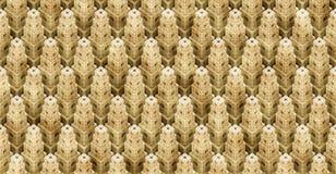 Den detaljerade kuben 3d anmärker ordnat till abstrakt (en sömlös) stadsbakgrund, Arkivbild