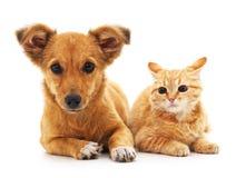 den digitala kattungevalpen skissar royaltyfri fotografi