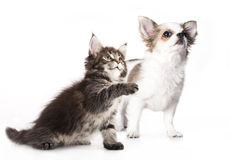 den digitala kattungevalpen skissar Royaltyfri Foto