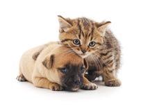 den digitala kattungevalpen skissar royaltyfri bild