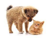den digitala kattungevalpen skissar Royaltyfria Bilder