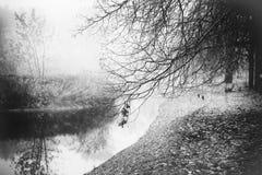 Den dimmiga dimmaskogen i Vitryssland parkerar vid floden, guld- höstfolliage Royaltyfri Bild