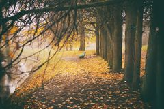 Den dimmiga dimmaskogen i Vitryssland parkerar vid floden, guld- höstfolliage Royaltyfria Bilder