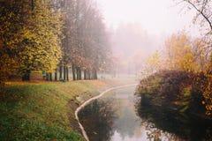 Den dimmiga dimmaskogen i Vitryssland parkerar vid floden, guld- höstfolliage Royaltyfri Fotografi