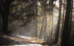 Den dimmiga mörka skogen med en svart skuggar tätt upp Royaltyfri Fotografi