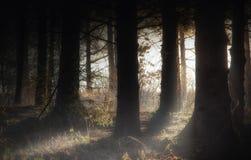 Den dimmiga mörka skogen med en svart skuggar tätt upp Royaltyfria Bilder