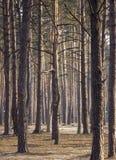 Den dimmiga mörka skogen med en svart skuggar tätt upp Fotografering för Bildbyråer