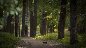 Den dimmiga mörka skogen med en svart skuggar tätt upp Arkivfoto