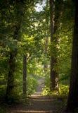 Den dimmiga mörka skogen med en svart skuggar tätt upp Royaltyfri Bild