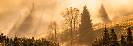 Den dimmiga morgonen i bergen med den första solen strålar Panorama- skott i varma färger royaltyfri fotografi