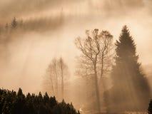 Den dimmiga morgonen i bergen med den första solen strålar Panorama- skott i varma färger royaltyfria bilder