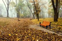 Den dimmiga morgonen i en höst parkerar Arkivbild