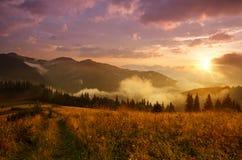 Den dimmiga morgonen landskap arkivfoton