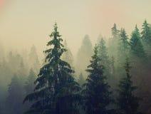 Den dimmiga morgonen landskap arkivbilder