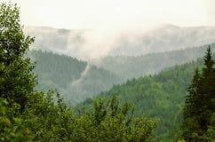 Den dimmiga morgonen landskap royaltyfri bild