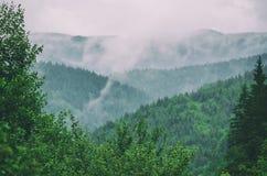 Den dimmiga morgonen landskap royaltyfri fotografi