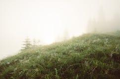 Den dimmiga morgonen landskap royaltyfria bilder
