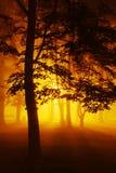 Den dimmiga natten parkerar in Arkivbild